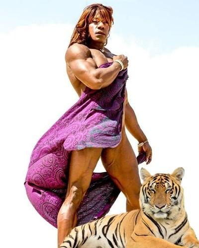 tigress1